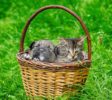 Fotografie cat and dog in the basket valentine day