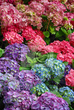 color flowers as nice natural spring background