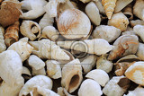 shell fosils collection as nice natural background