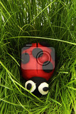 ladybird from plasticine in the green grass