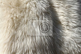 polar bear skin as nice animal texture