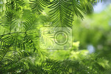 Fotografie very nice natural christmas background in green color