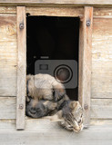Fotografie small cat and dog and their nice wooden home