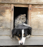 Fotografie small cat and big dog and their nice wooden home