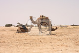 Photo camels and dry sahara in the tunisia