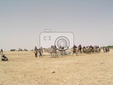 Photo sahara and caravan with camels in tunisia