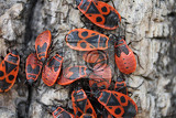 red bugs on the brown bark of the tree