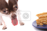 Fotografie chihuahua and cake on the white background