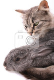 Fotografie cat and rabbit on the white background