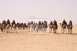 Photo sahara with camels and people from the tunisia