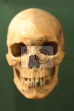 Photo very old human skull on the green background
