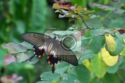 colourful tropical butterfly on a bush